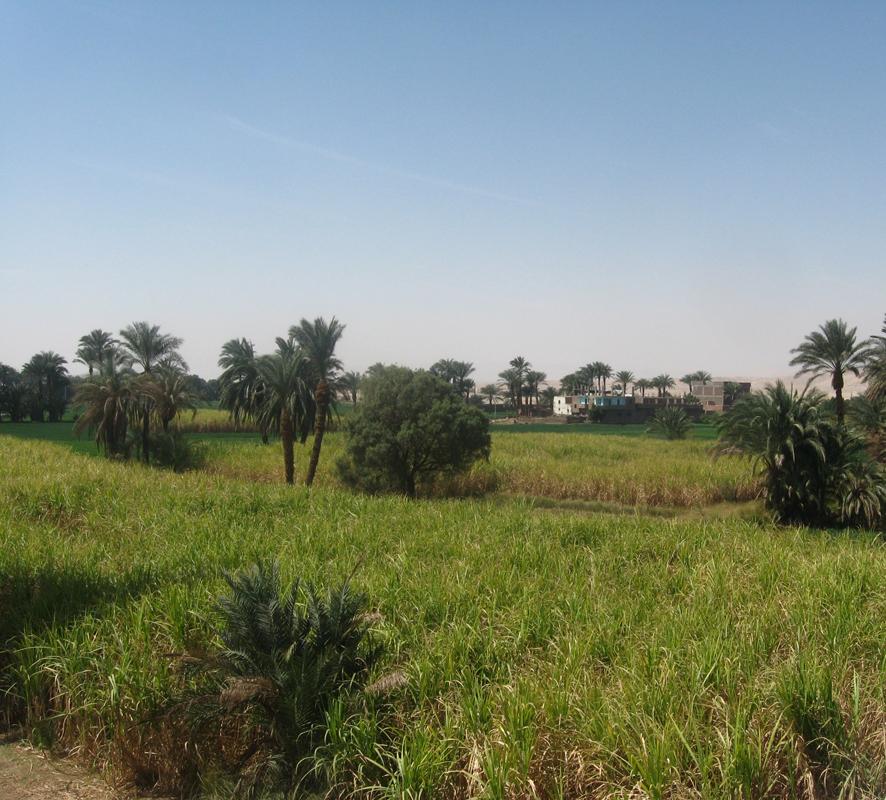 La campagne proche de la villa.