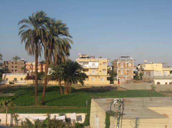 Palmiers et villas