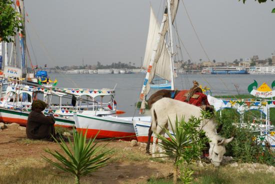 Les berges du Nil à 50m de la villa.