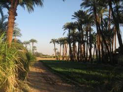 La campagne Thébaine , avec ses palmiers dattiers