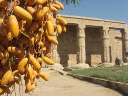 Temple de Seti 1er - Aout 2008