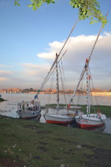 Les berges du Nil à 50m des villas.