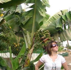 La reine des bananes !