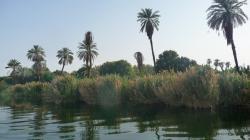 Les berges du Nil
