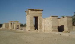 Temple Ibis