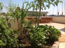 Jardinière de la terrasse