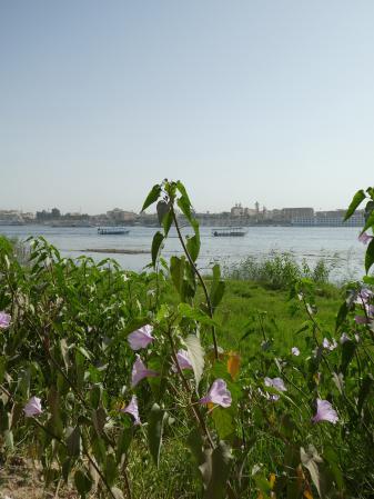 Le Nil - Novembre 2018