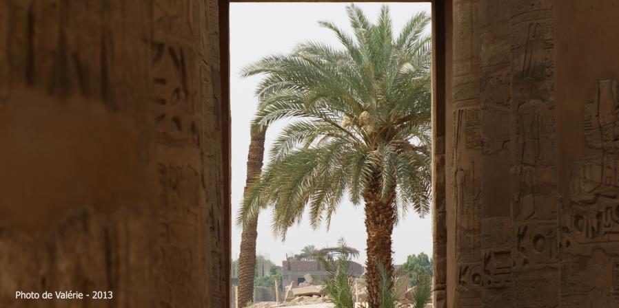 De la salle Hypostyle, les palmiers.